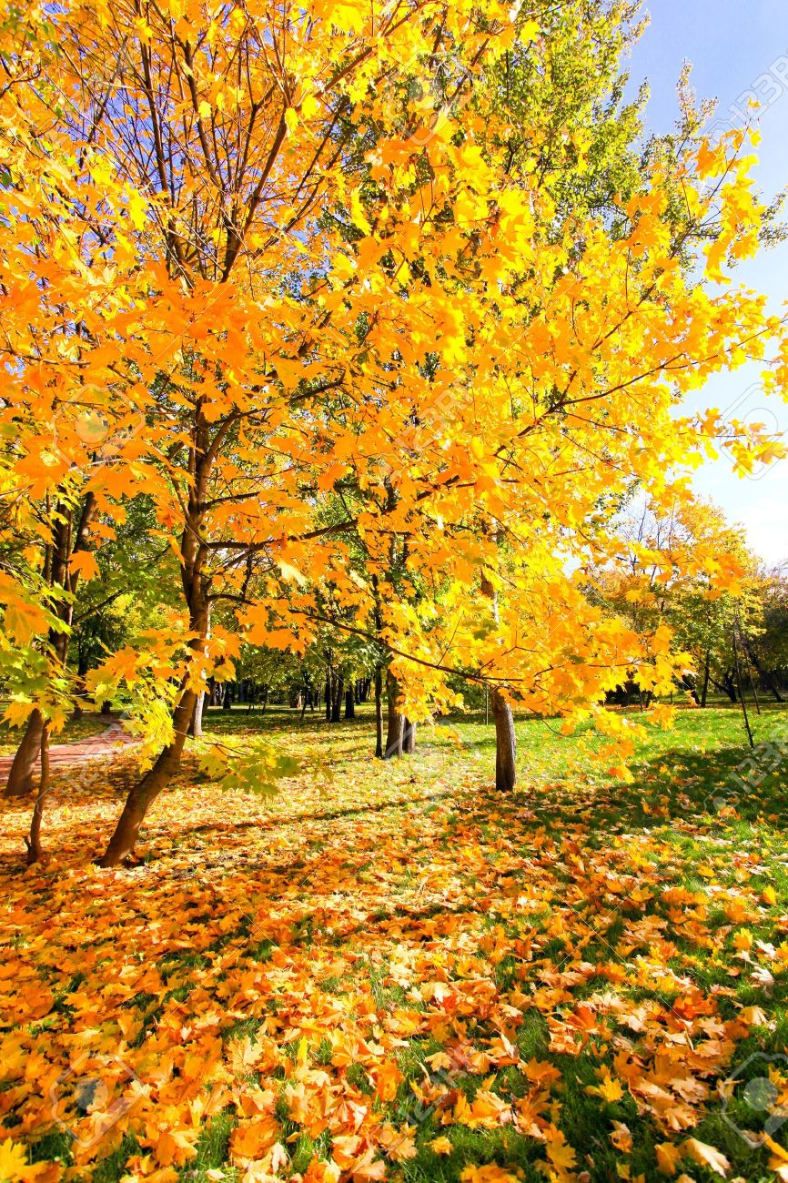 beautiful colorful autumn park in sunny day Stock Photo - 10980843