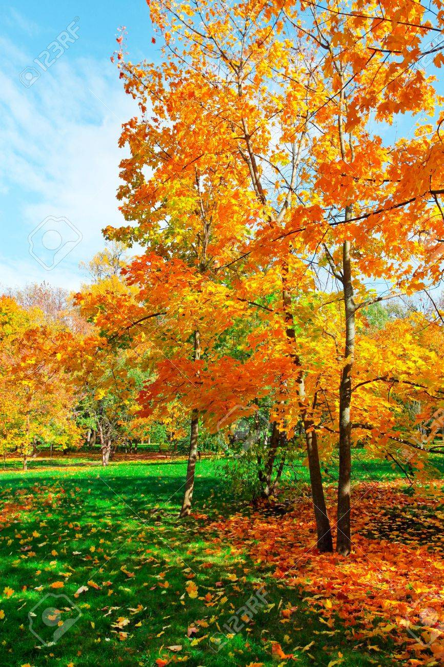 colorful autumnal forest Stock Photo - 10980861