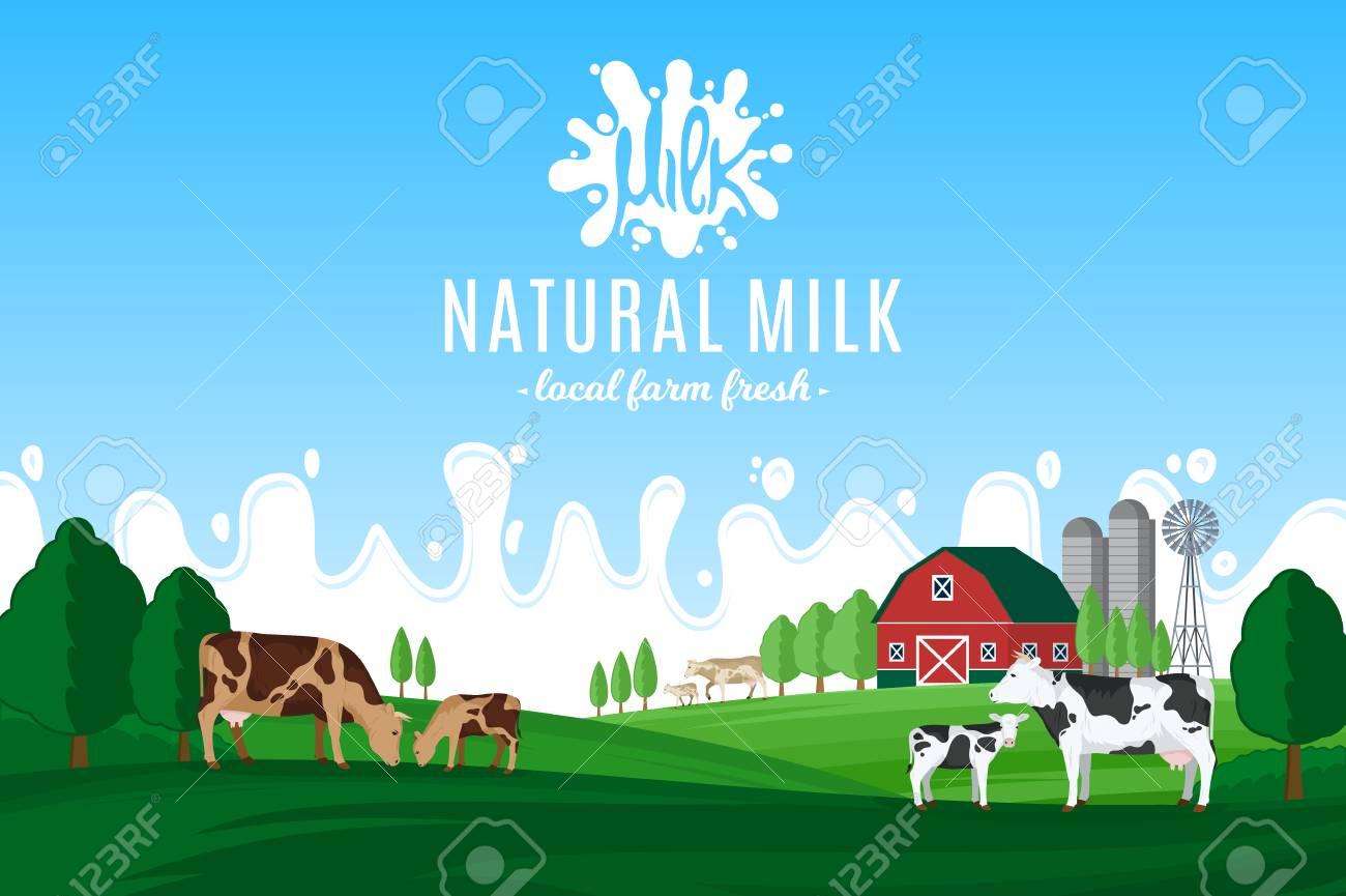 Vector milk illustration with milk splash. Summer rural landscape with cows, calves and farm. - 95301180
