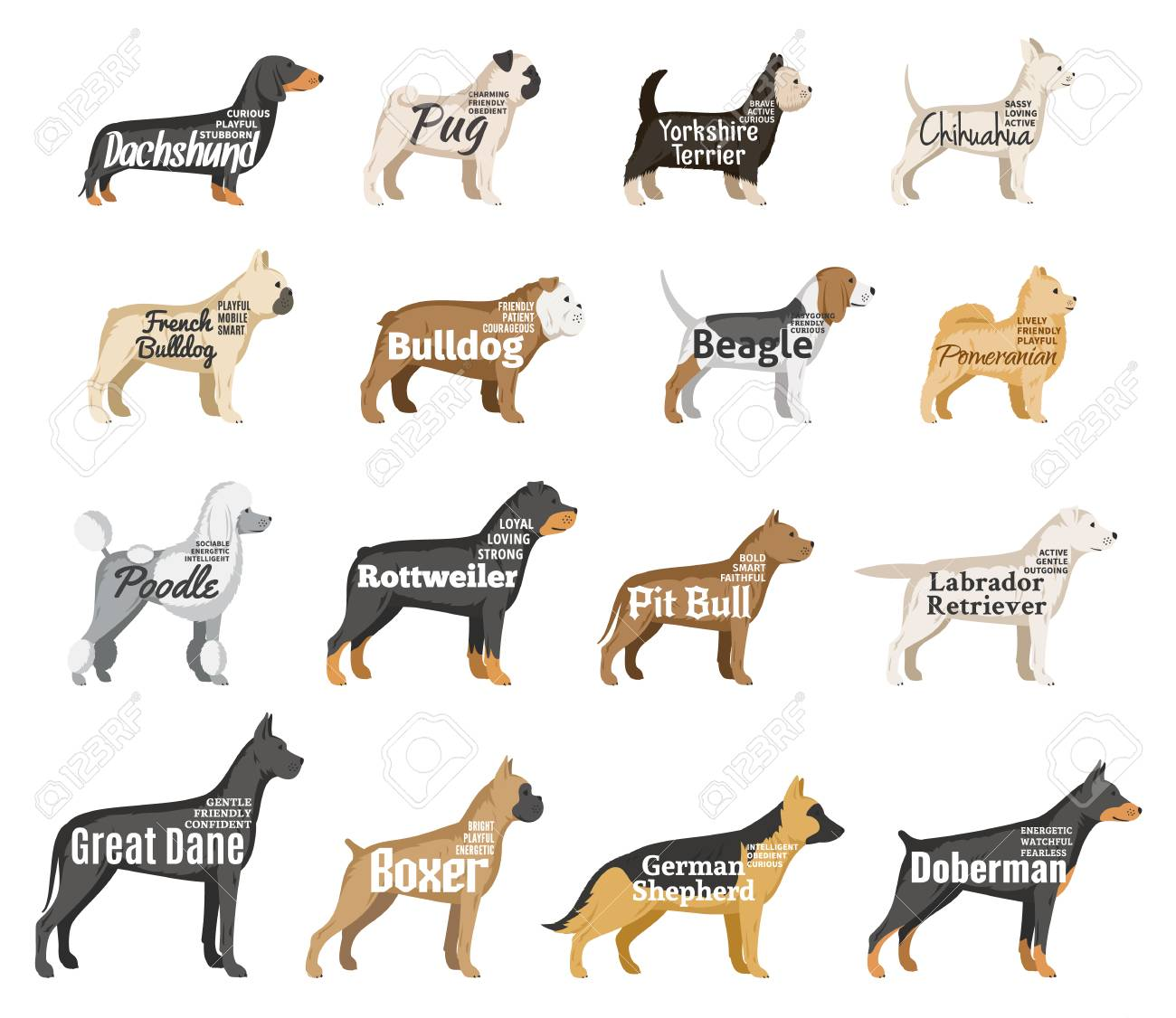 Vector Dog Breeds Illustration With Names And Personality