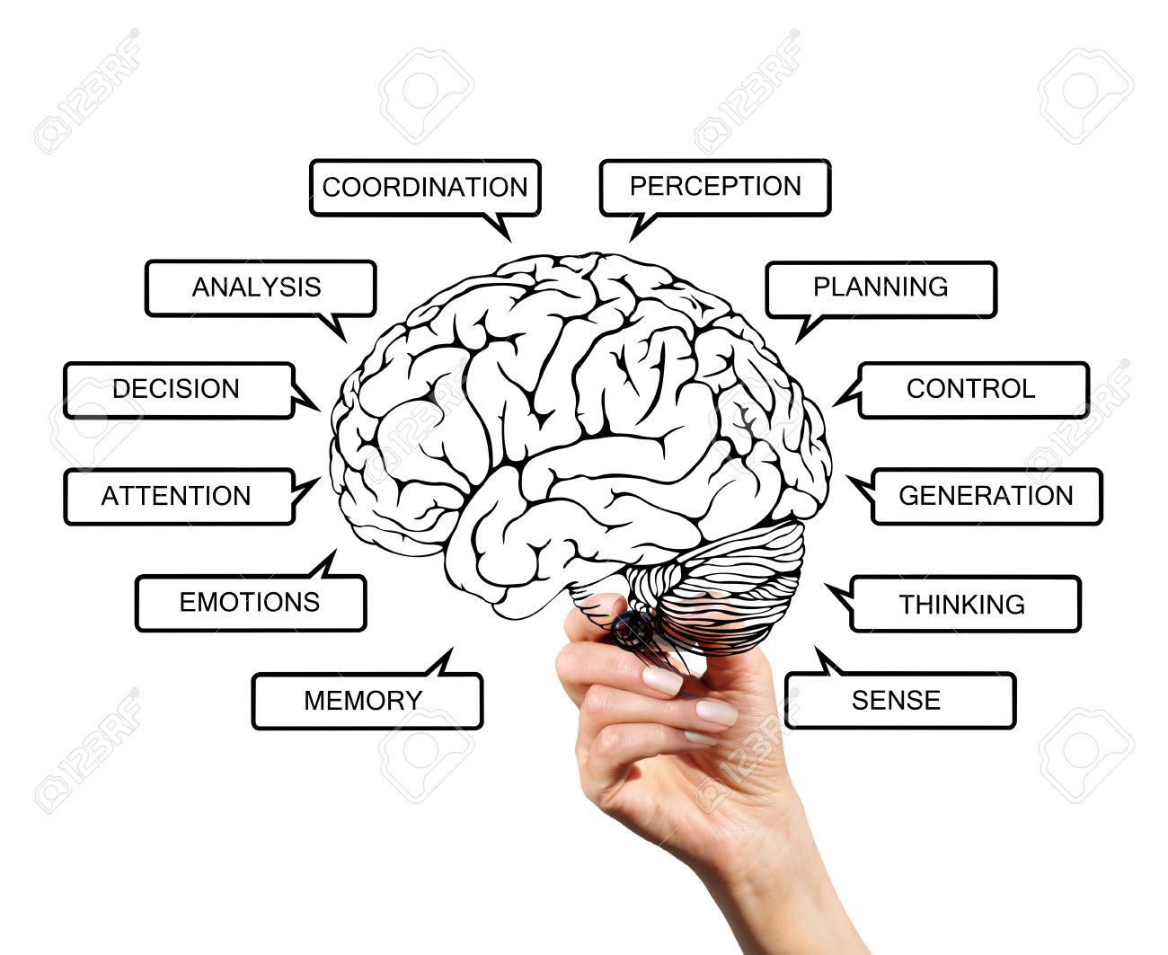Fun Brain Diagram - Trusted Wiring Diagram •