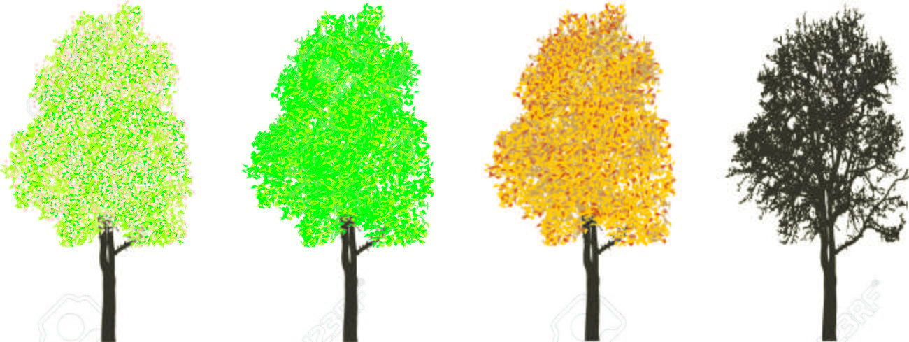 Tree in four sections of the four seasons, spring, summer, autumn and winter Stock Vector - 6423505