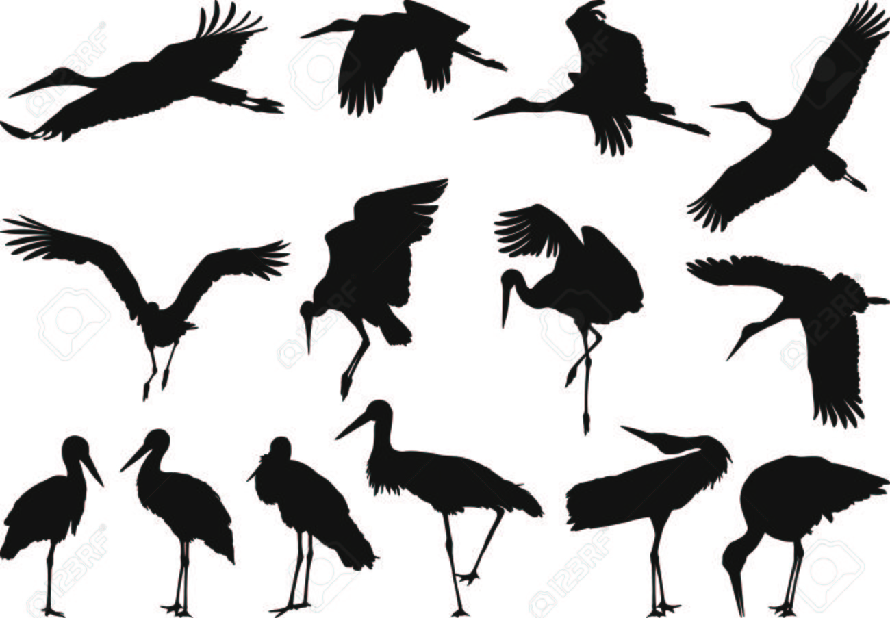 Collection of silhouettes on white storks Stock Vector - 7418878