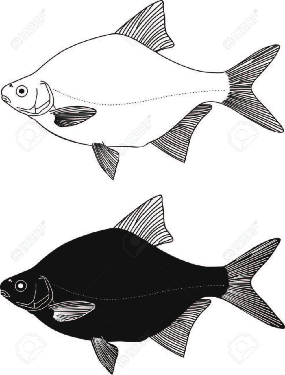 Blanco Y Negro Ilustración Peces De Agua Dulce Dorada