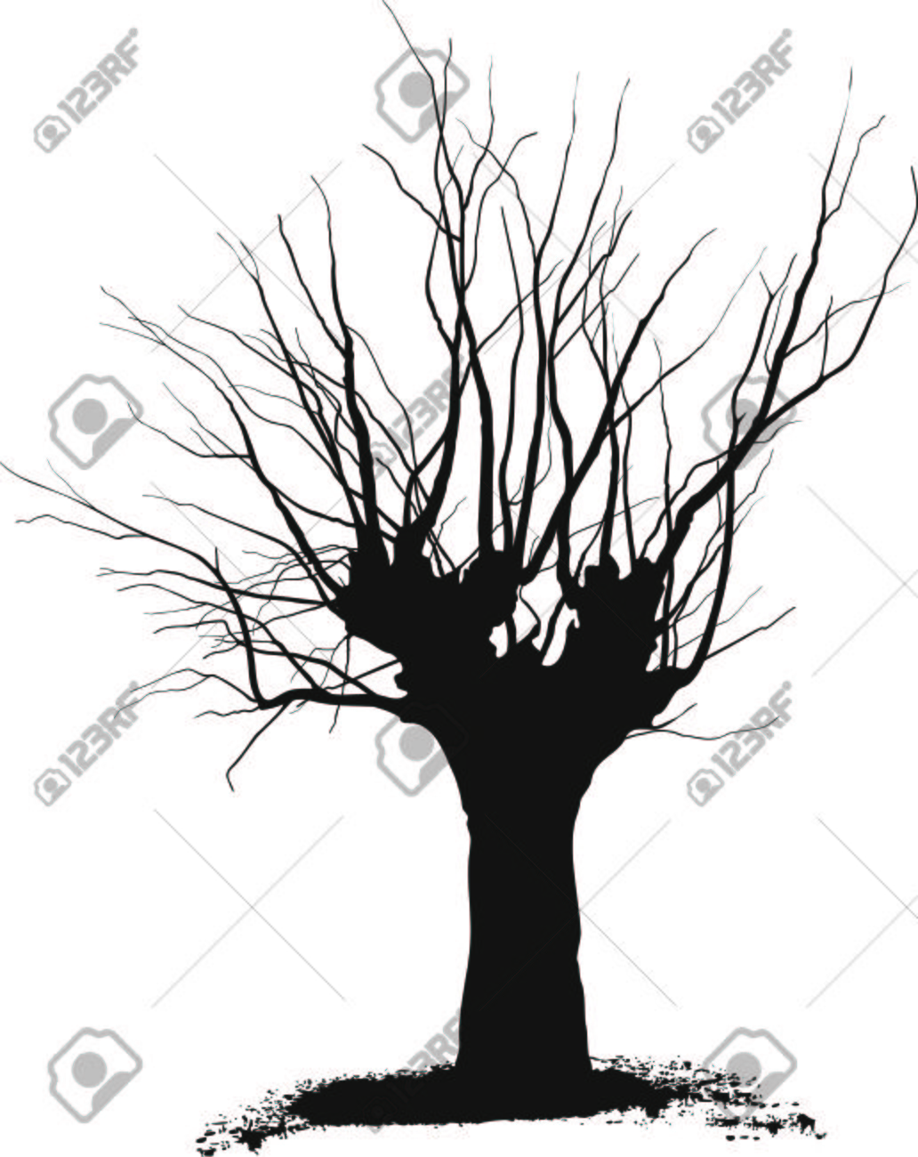 Silhouette acacia tree black
