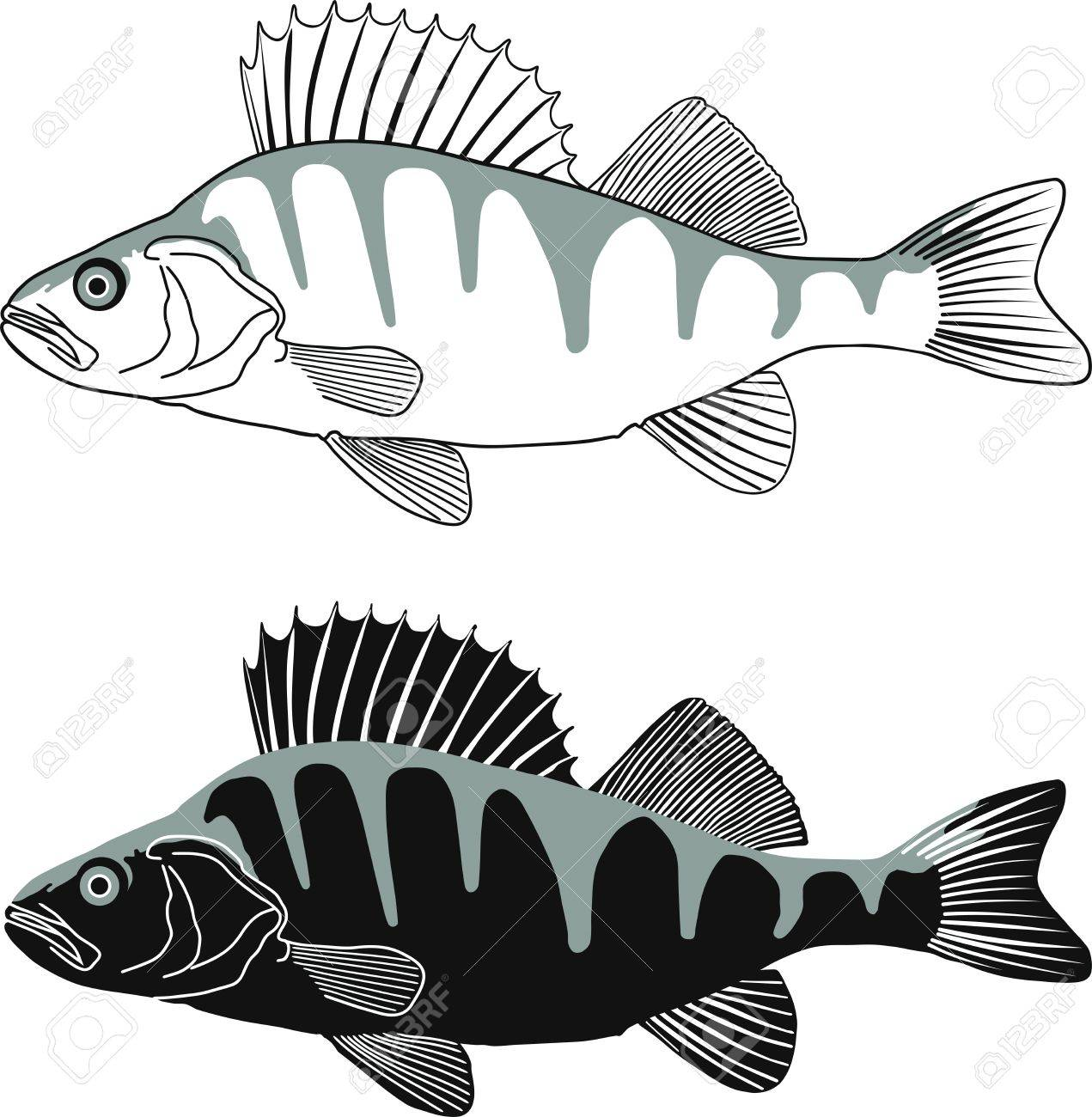 black and white illustration perch isolated vector royalty free rh 123rf com Fish Skeleton Perch Fish Clip Art Black and White