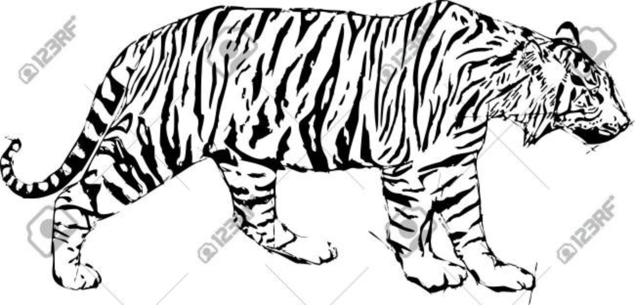 hand pen drawn sketch vector illustration of tiger royalty free