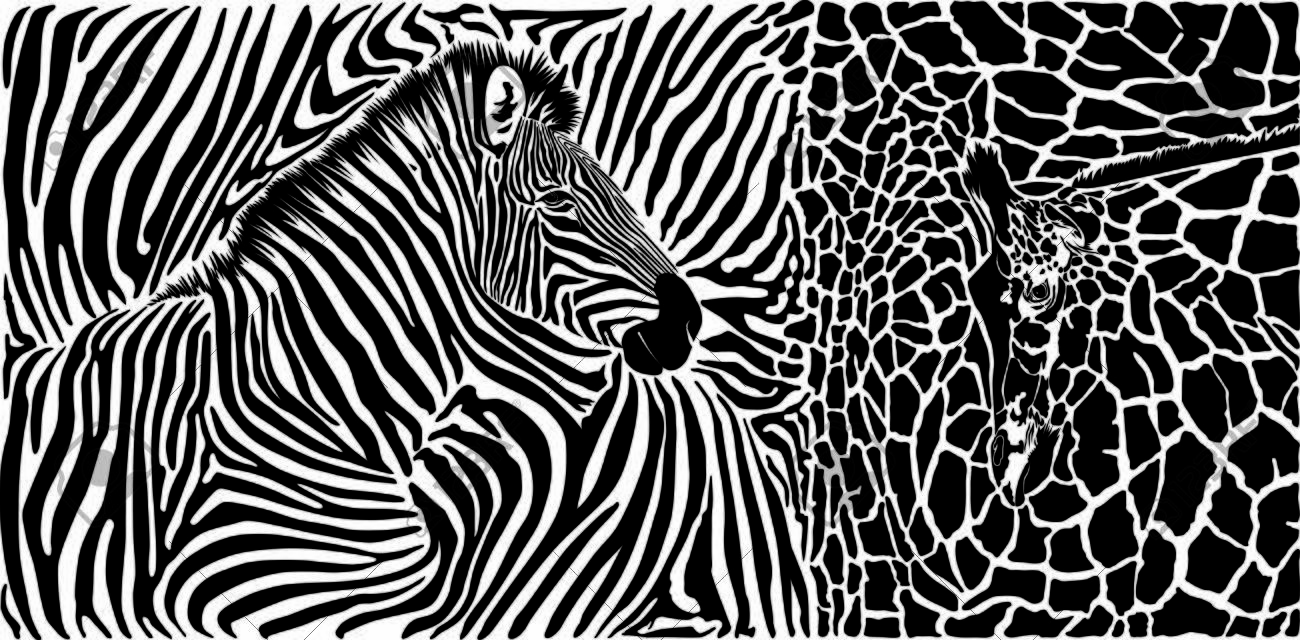 Vector black and white graphic background with zebra and giraffe motif - 150108273
