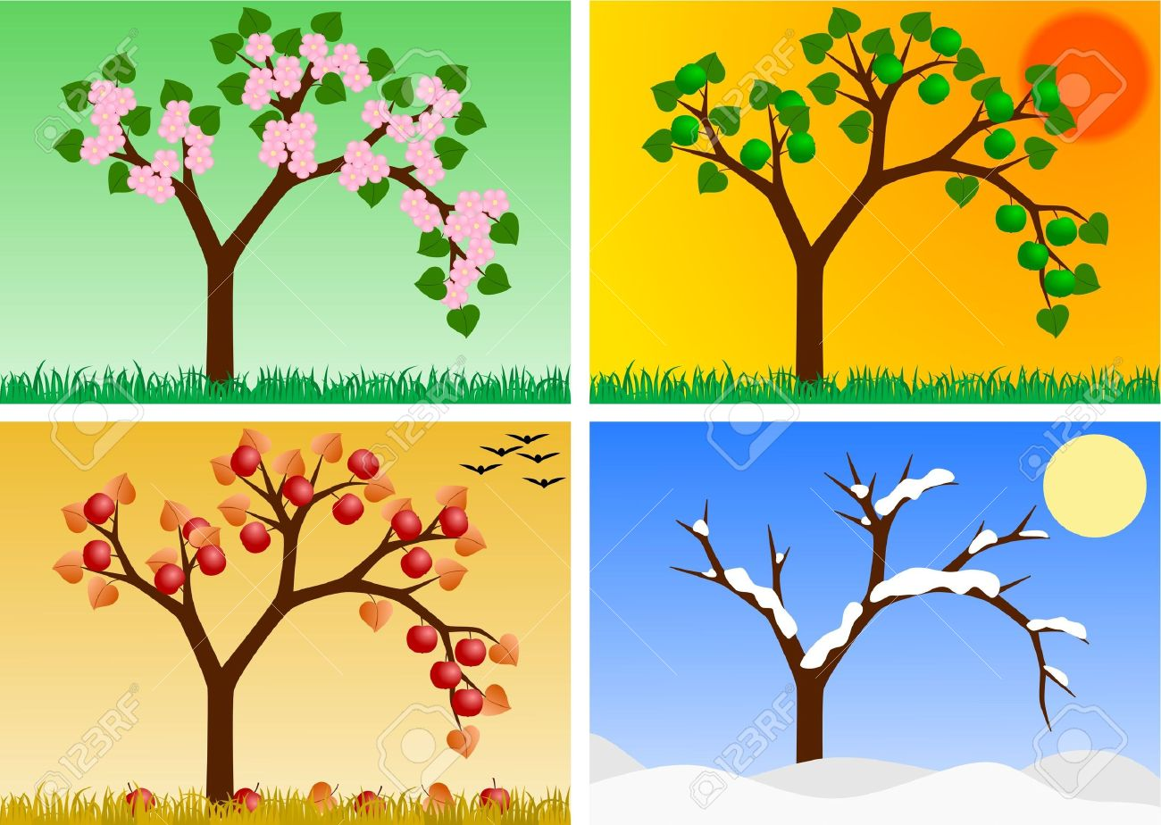 apple tree in four seasons stock photo picture and royalty free