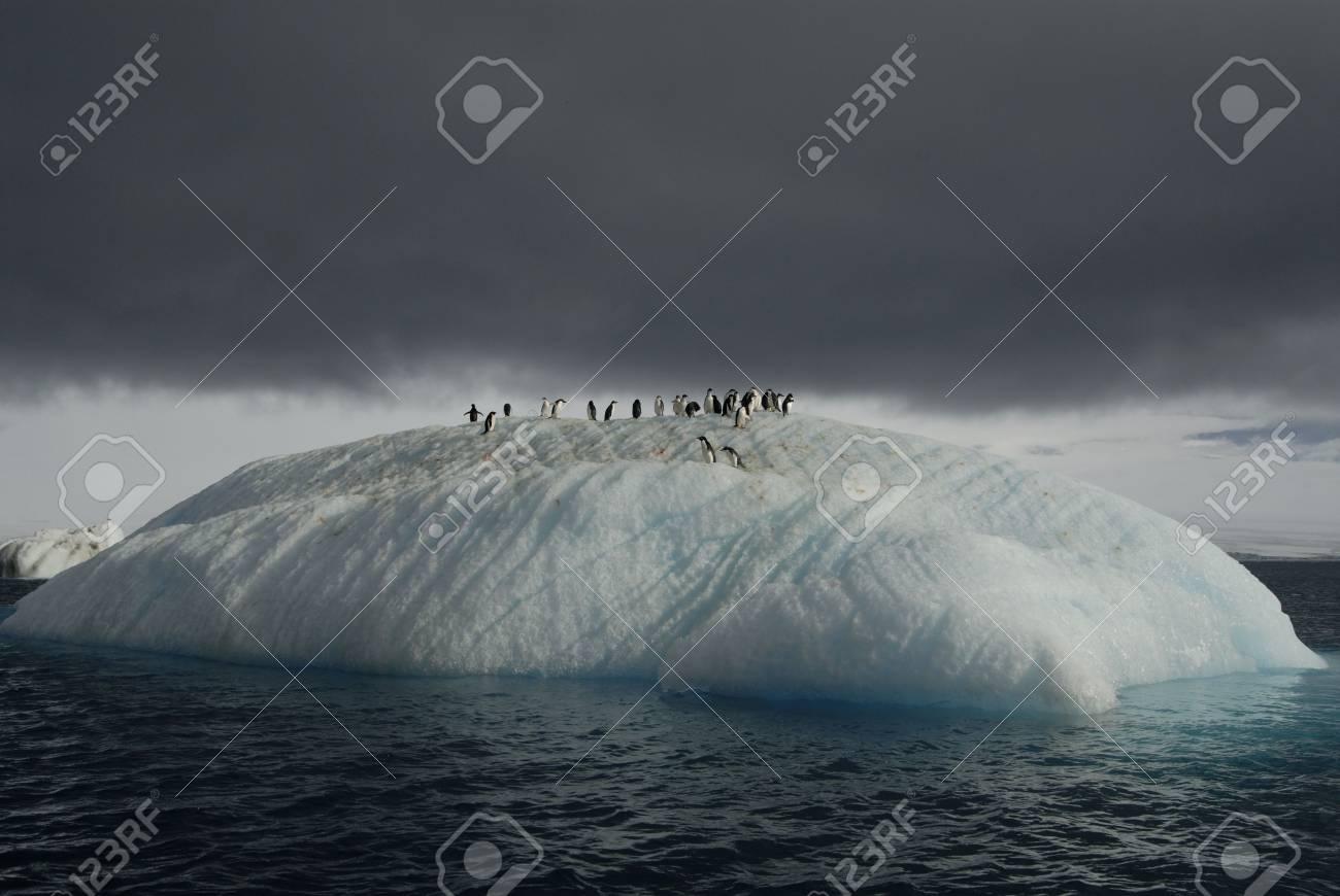 Adeli on the Ice - 1728916