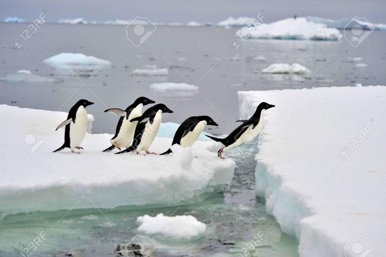 Adelie Penguins on the iceberg in Antarcdtica - 56089699