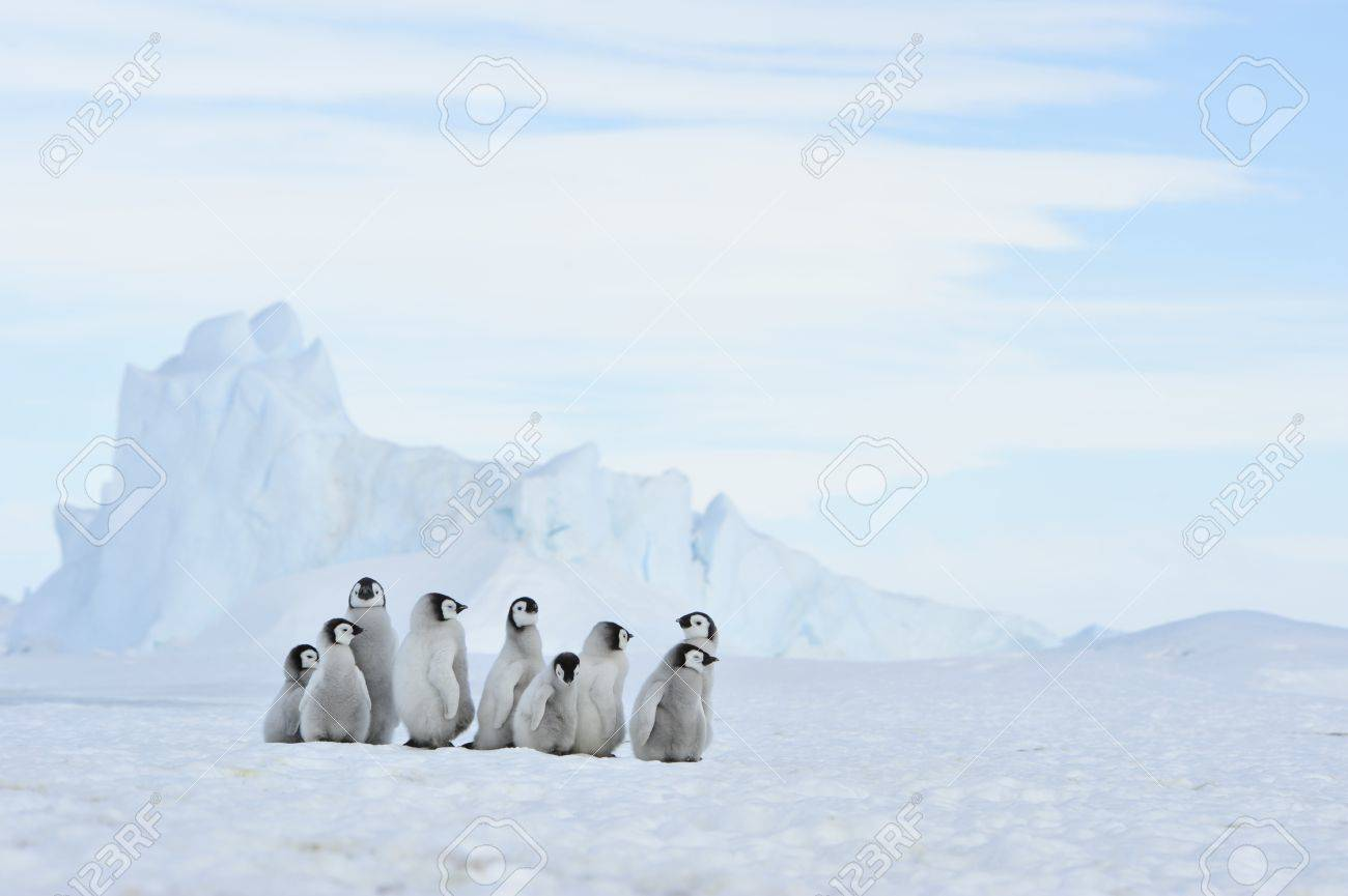 To the heart of nature travel to Antarctica. - 77955611