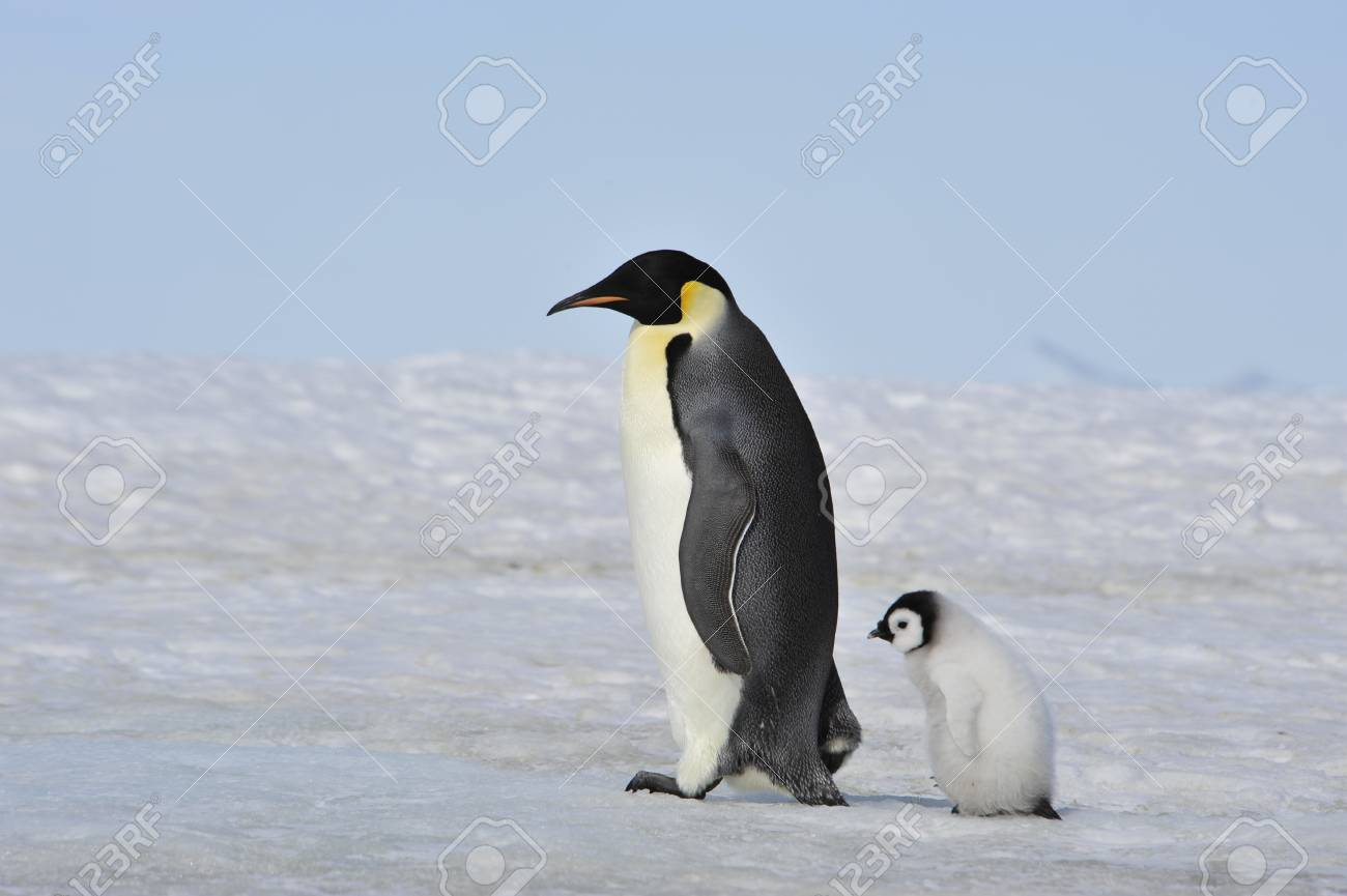 To the heart of nature travel to Antarctica. - 77955540