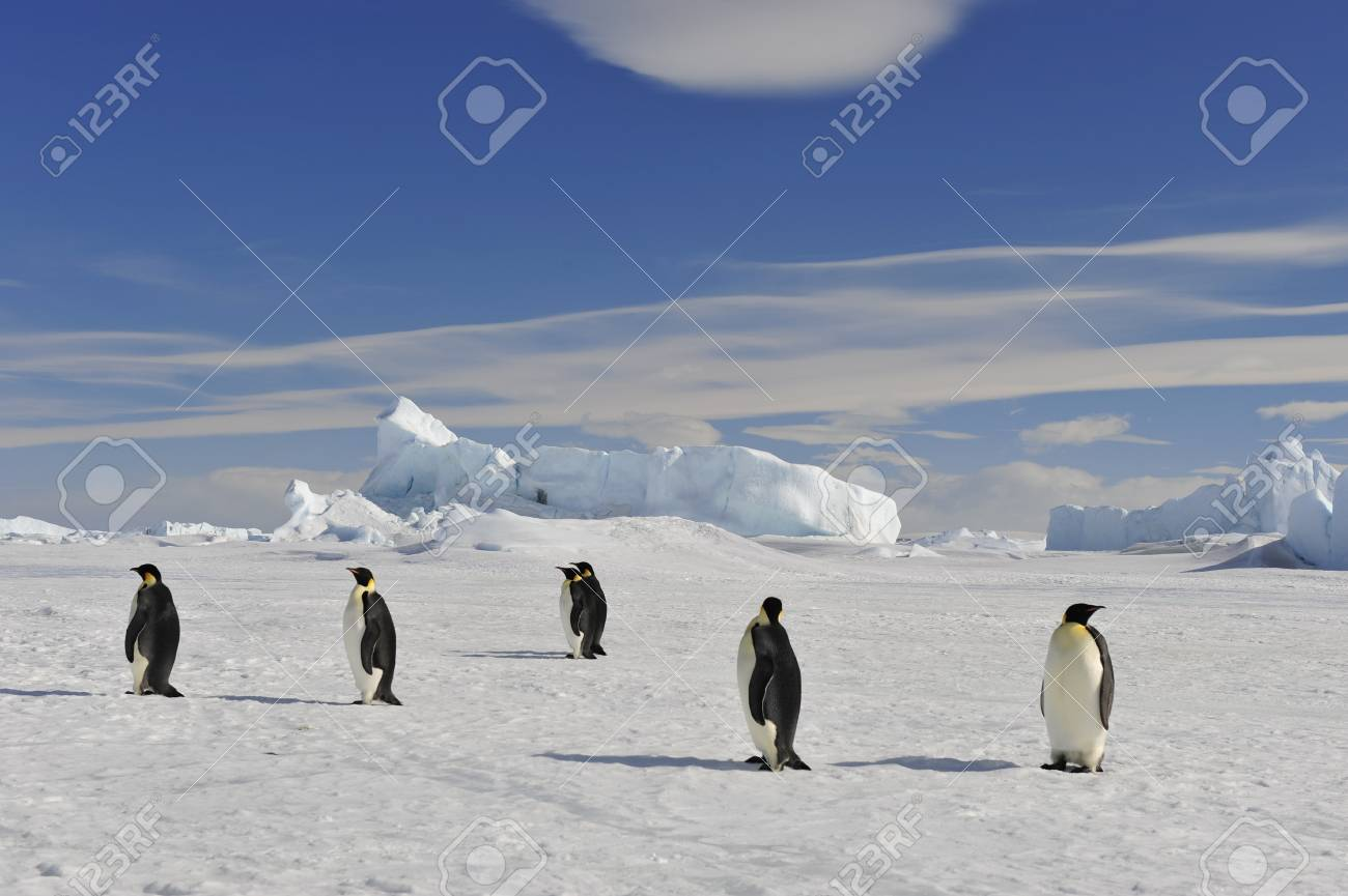 To the heart of nature travel to Antarctica. - 77955514