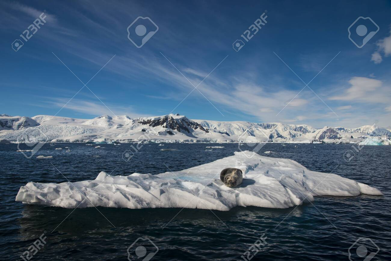 Beautiful view of icebergs with Penguins on it in Antarctica - 142985859