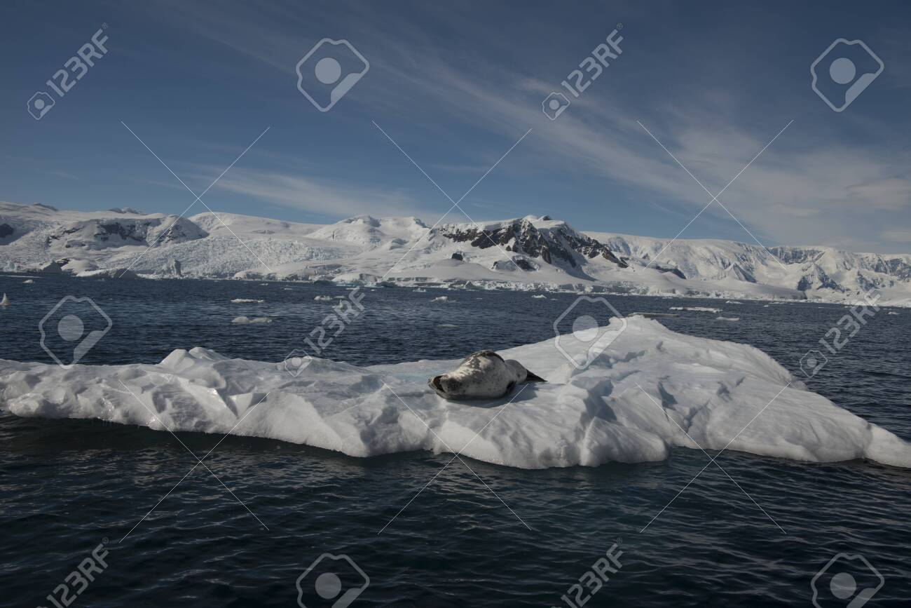 Beautiful view of icebergs with seals in Antarctica - 142986637