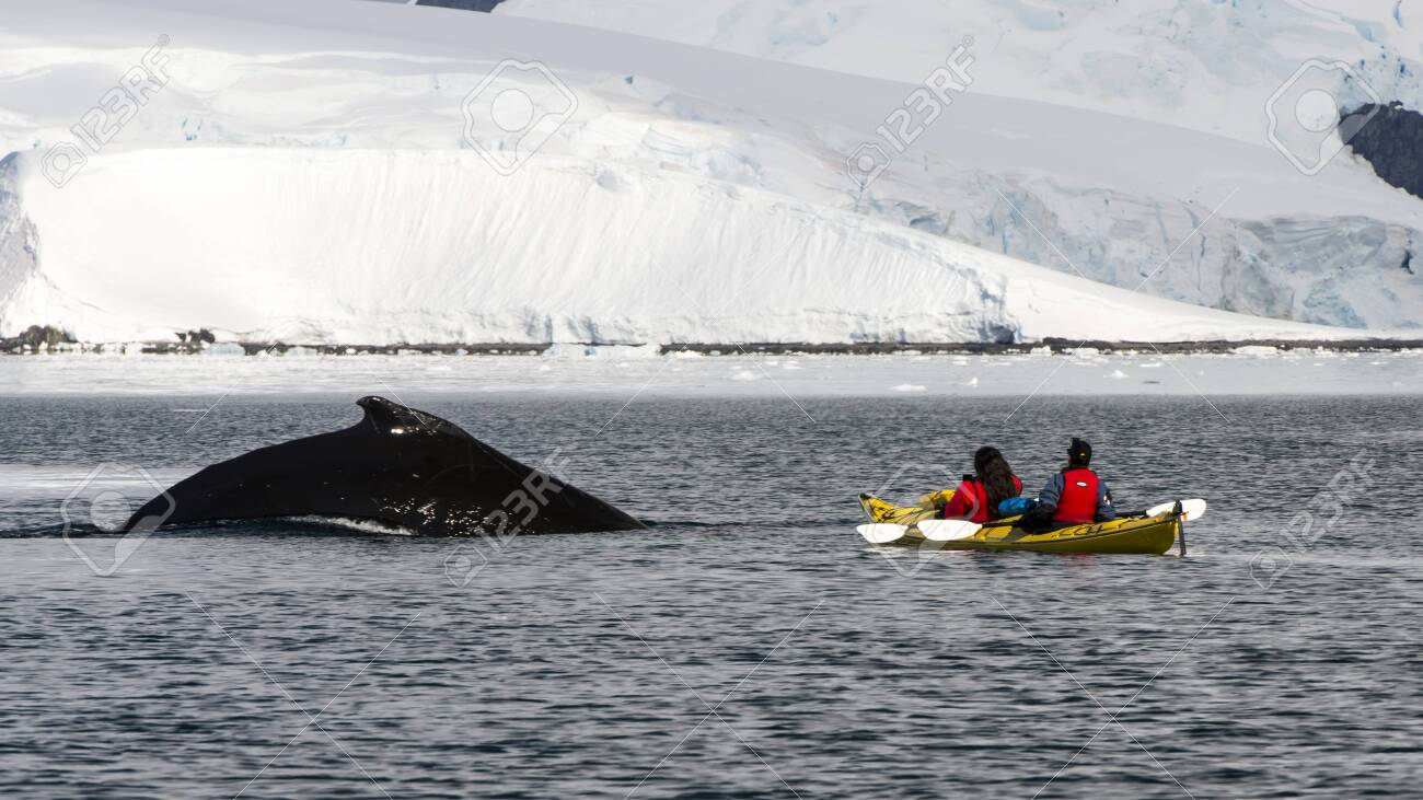 Kayaking with whales in Antarctica beautiful view of mountain - 142986828
