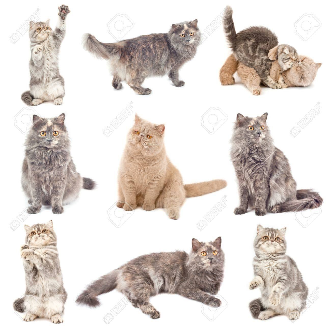 Collection of a cats in different poses isolated over white background Stock Photo - 9698503