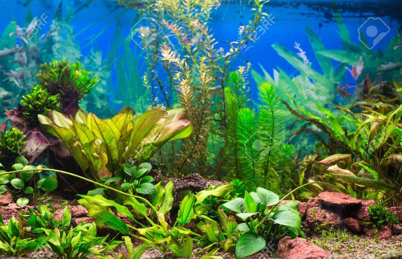 interior aquarium a green plant tropical freshwater aquarium stock