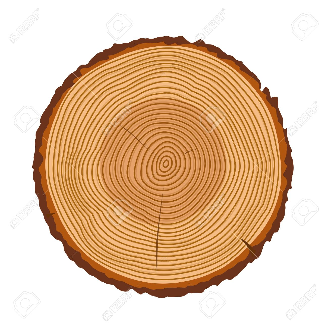 Tree rings, tree trunk rings isolated, wood ring texture, tree rings vector illustration, wooden rings icon with splits and cracks, cracked rings of a tree design - 58024963