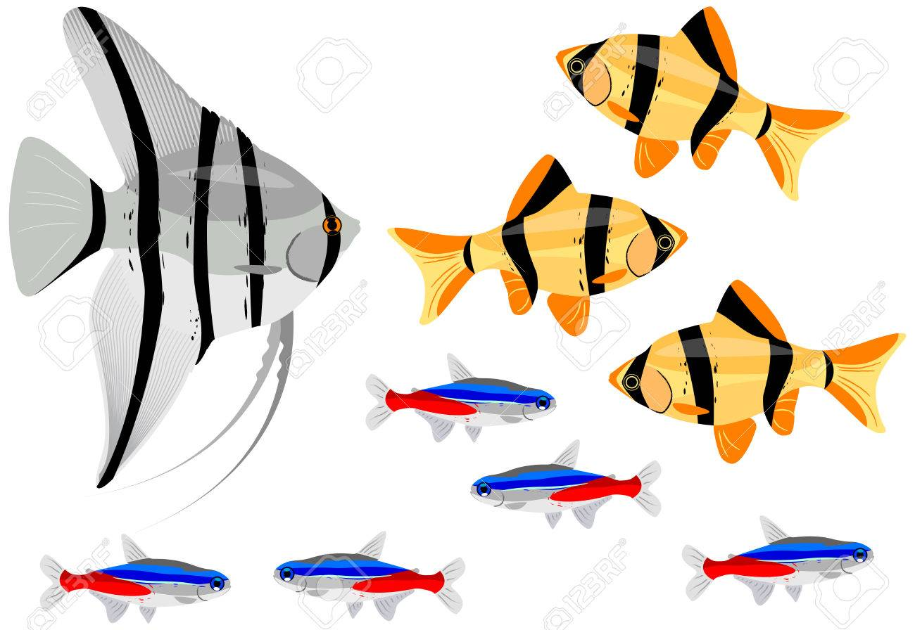 Various fishes separated on the white background. Stock Vector - 5792970