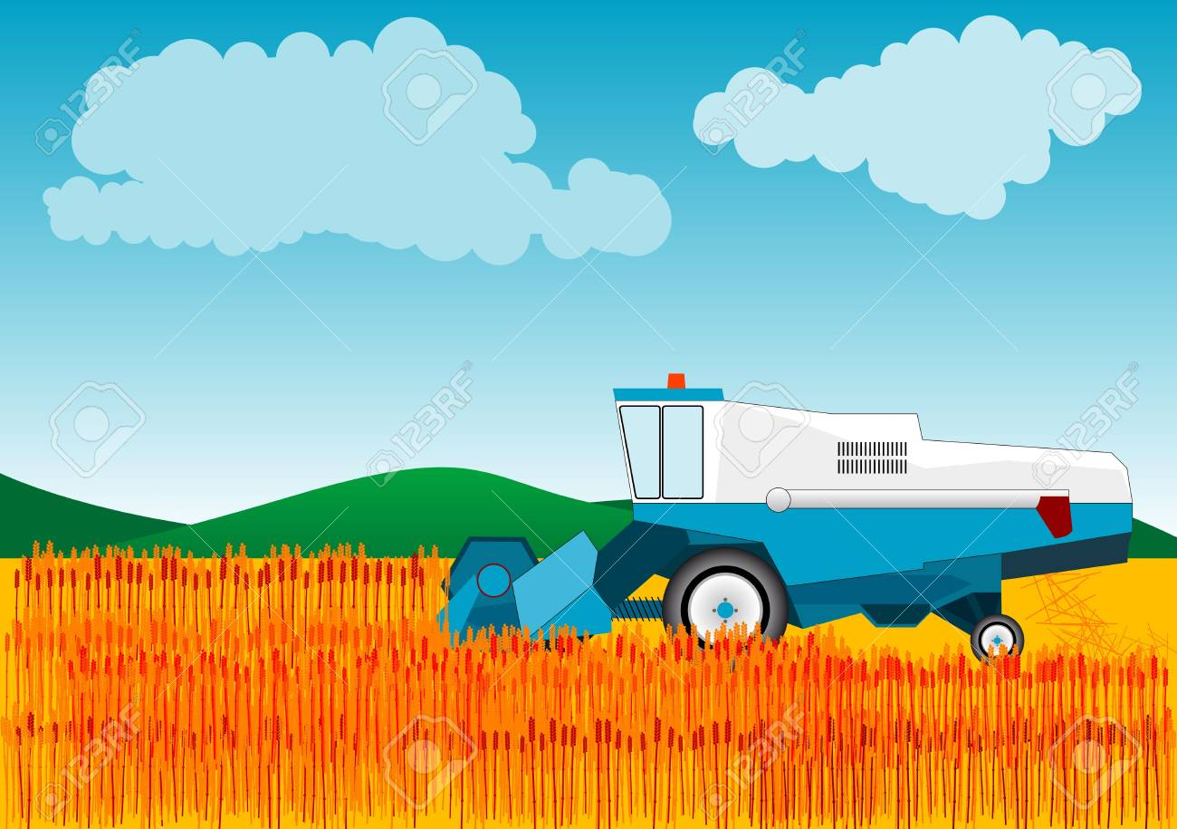 Blue combine is cutting wheat. Stock Photo - 5826205