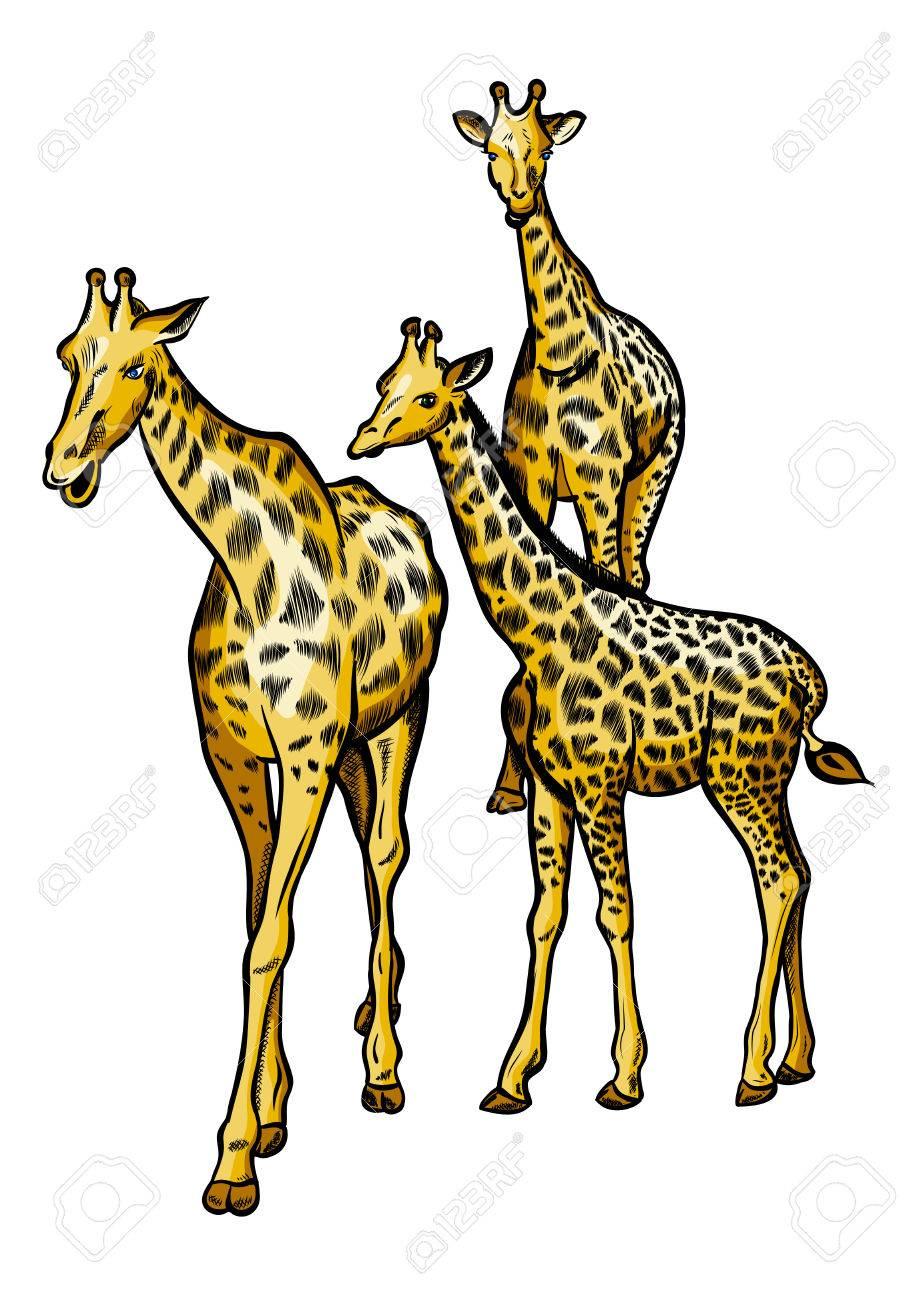 Family of three big giraffes. Stock Vector - 8562169