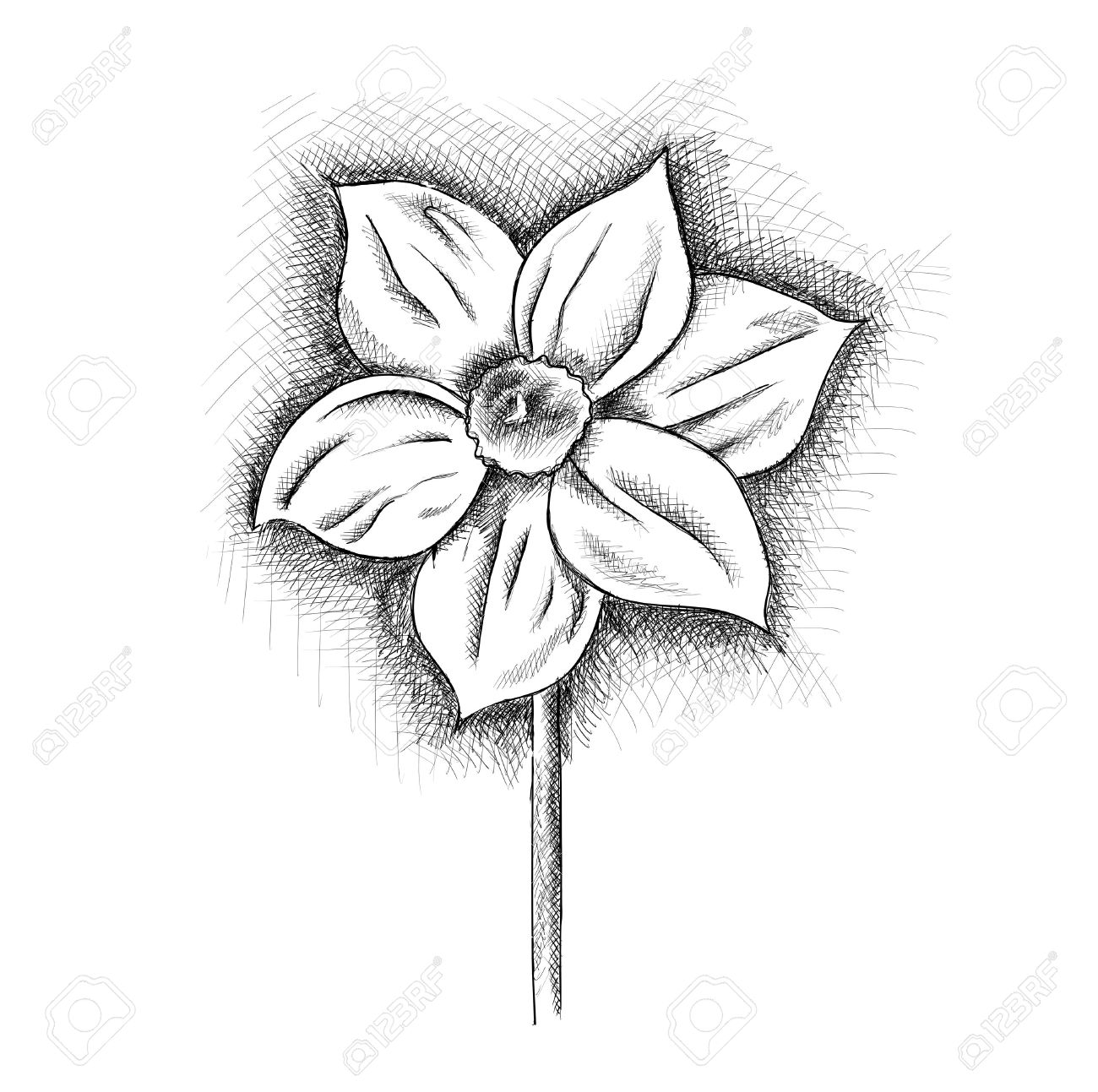 daffodil isolated on the white Stock Vector - 11844928