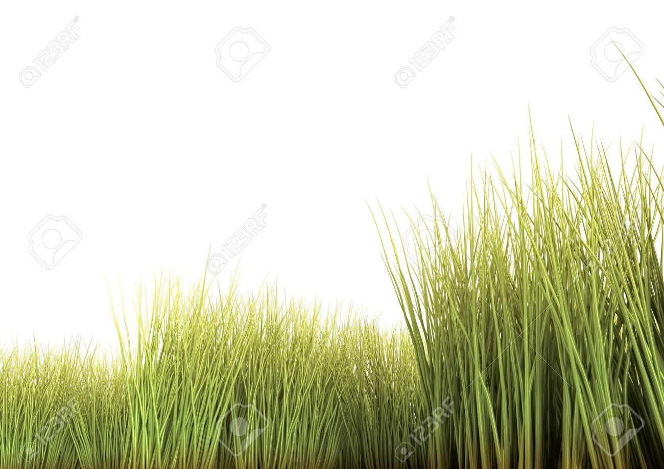 Zu Hohes Gras Auf Dem Weißen Hintergrund 3d übertragen Lizenzfreie