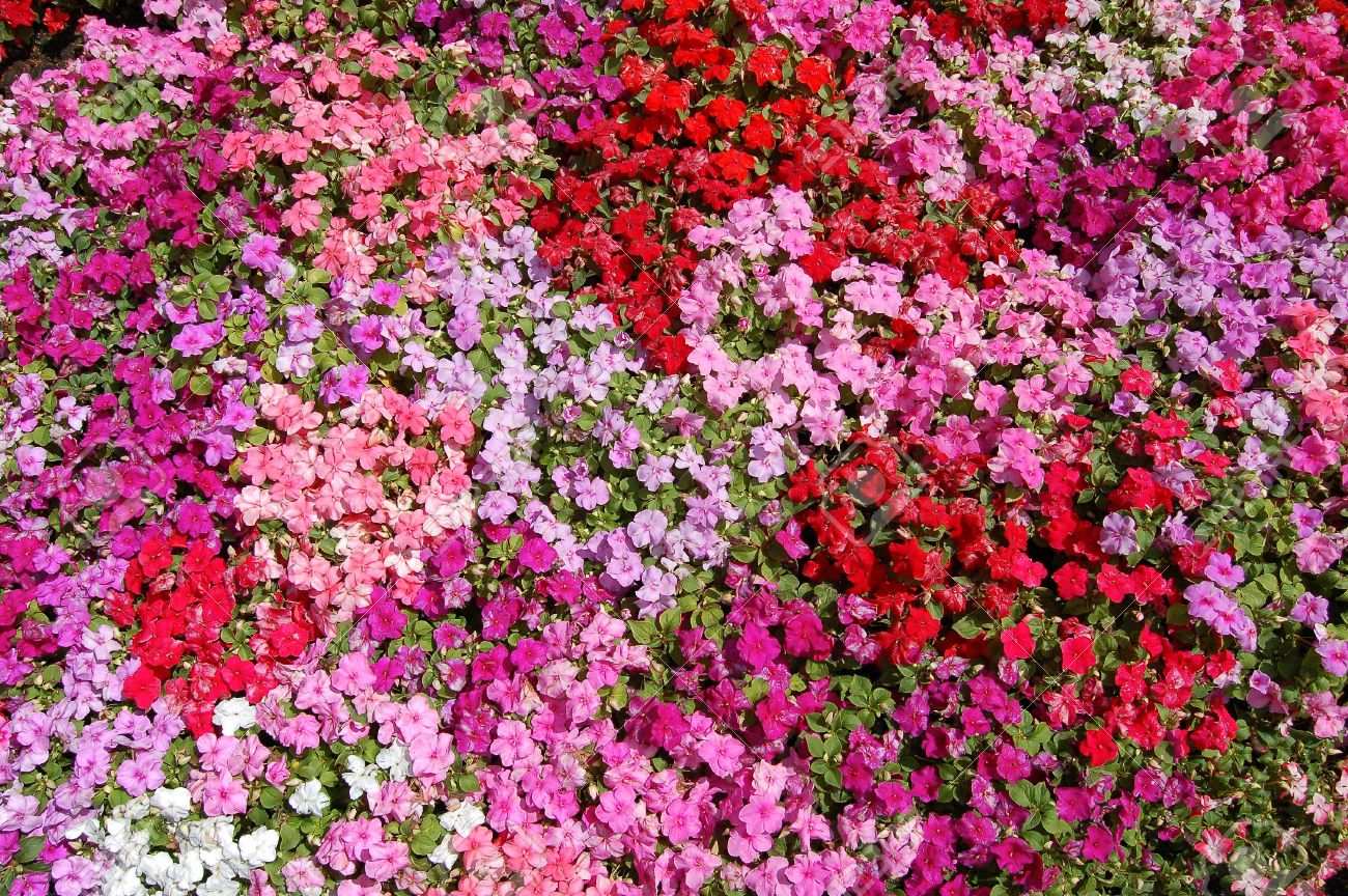 Small Pink Red And Purple Flowers Texture Stock Photo Picture And