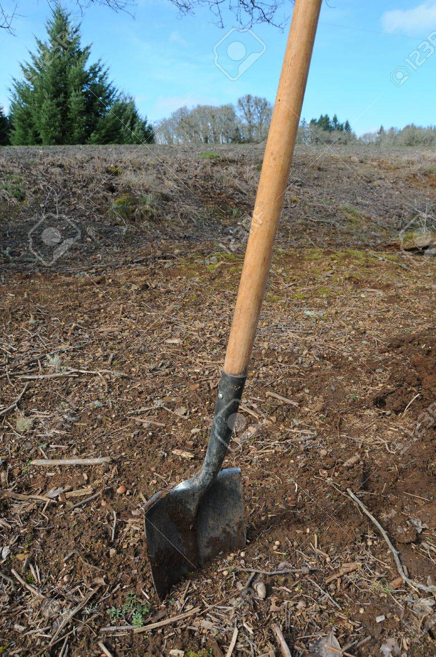A shovel stuck in dirt. It appears to have been used before. Yard work. Stock Photo - 6652341