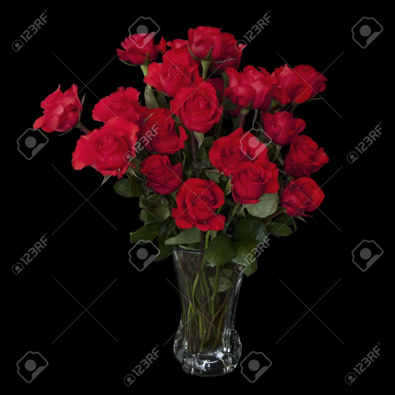 Two dozen red roses isolated on black background with the green two dozen red roses isolated on black background with the green stems in a large glass reviewsmspy