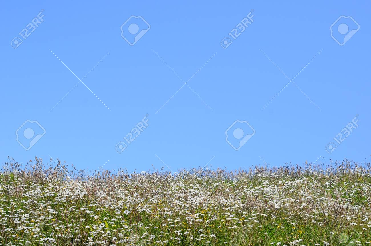 grass field from above. Stock Photo - Uphill Grass Field With Blue Sky Above From