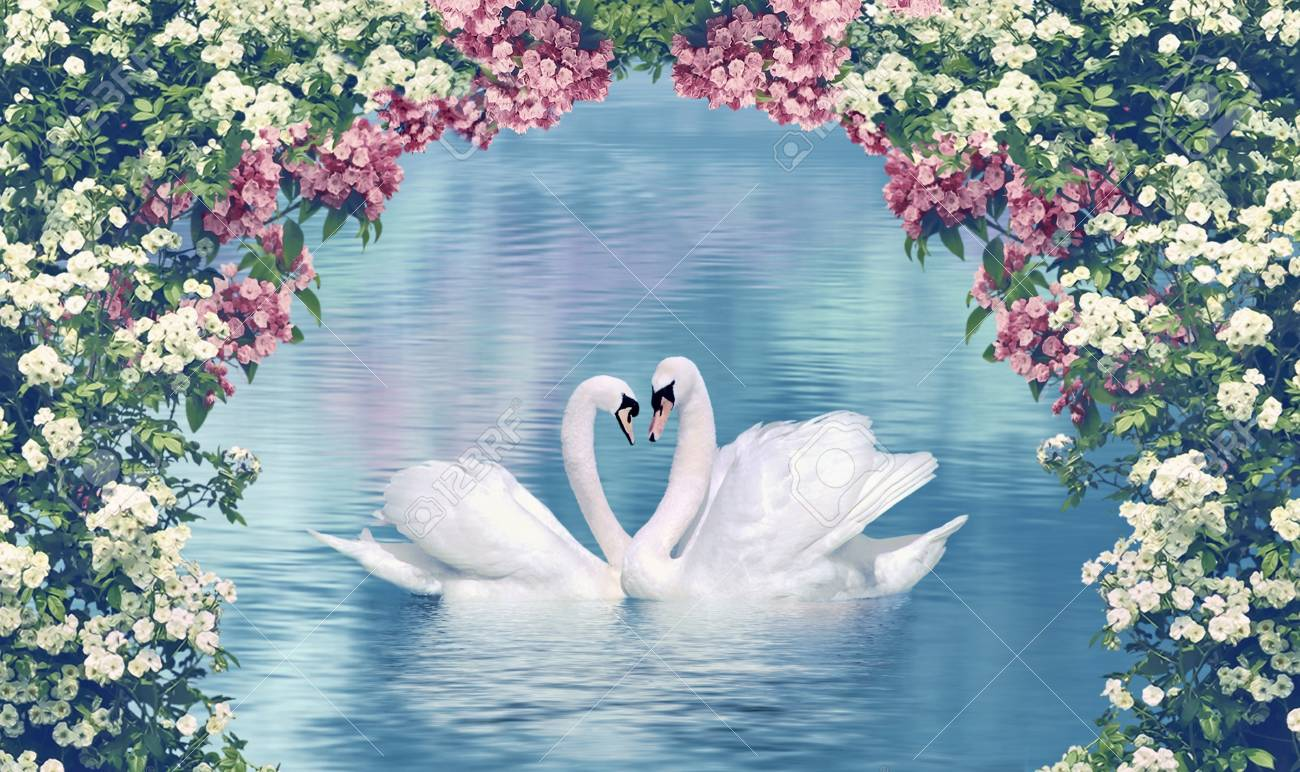 Anmutige Schwäne In Der Liebe Mit Blühenden Blumen Umrahmt ...