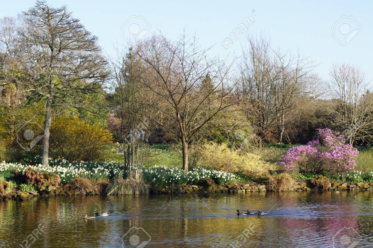 Spring Flowers And Shrubs Reflected In A Lake With Ducks Swimming