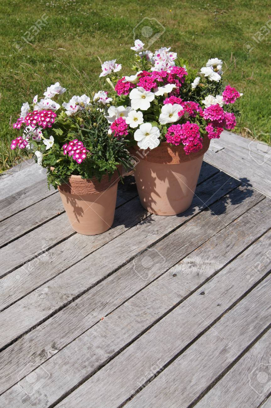 Summer Potted Plants On Decking In Garden Stock Photo Picture And