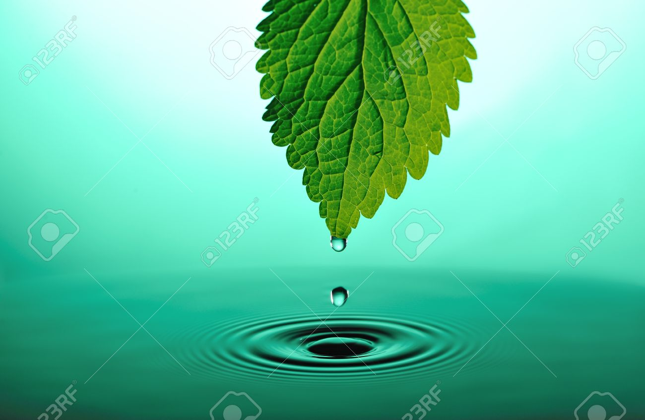 falling drops from tip of green leaf into green rippled water Stock Photo - 8746272