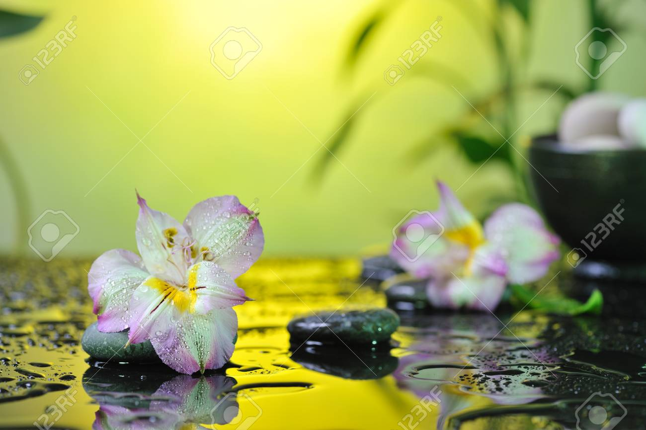 flower and stones on wet background Stock Photo - 17189276