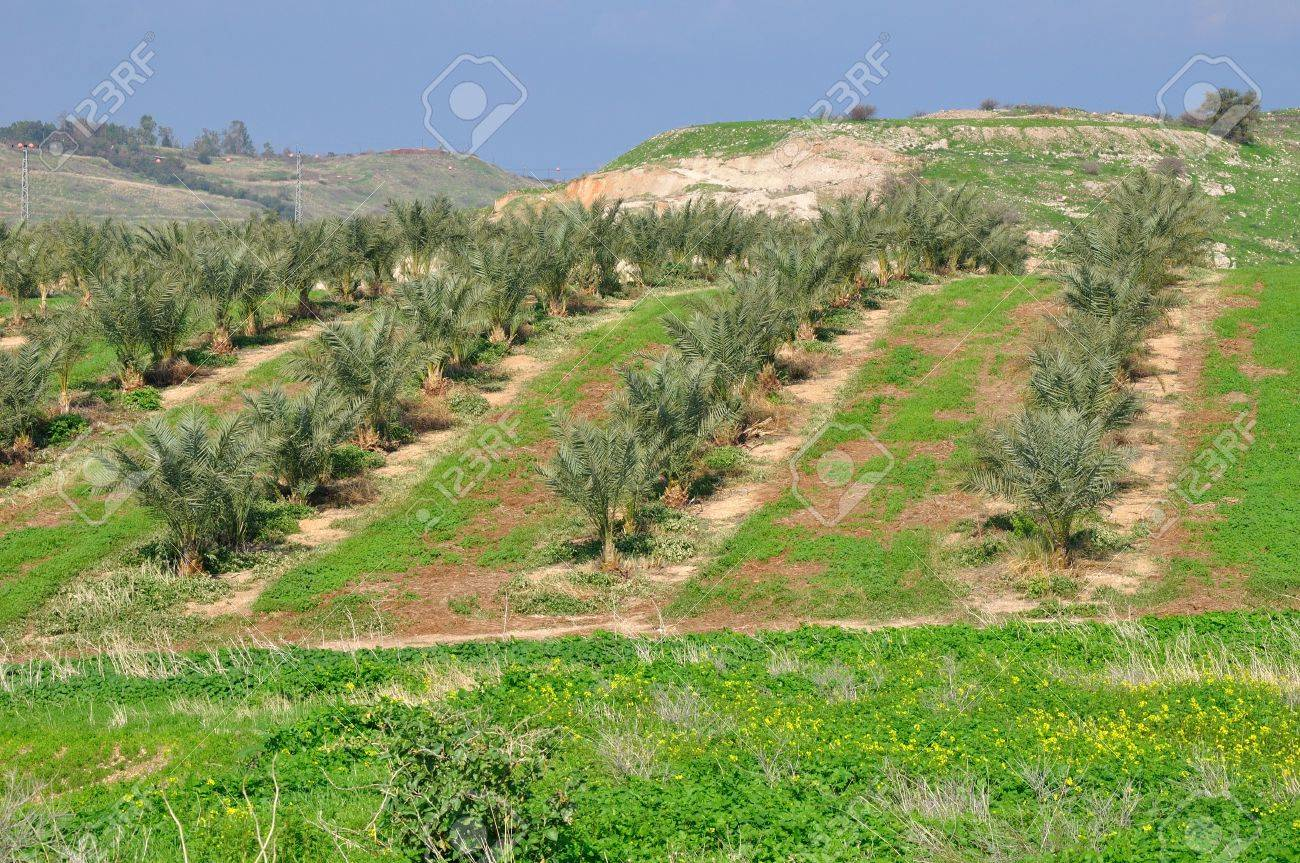 Young palms growing on a hill Stock Photo - 13175284