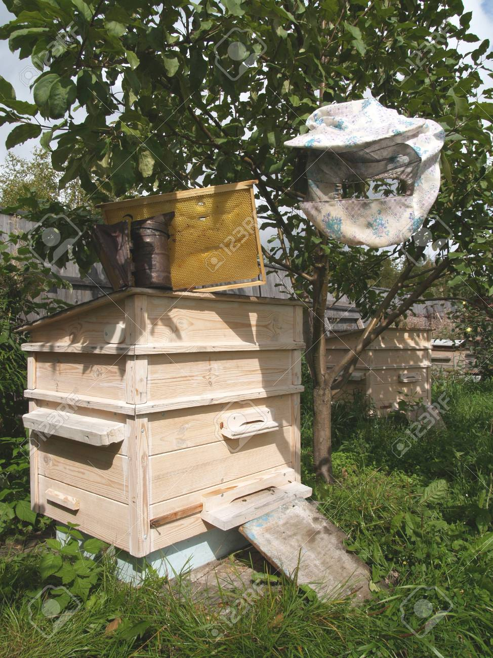 On an apiary Stock Photo - 13420022