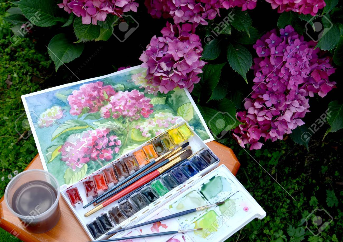 El Dibujo Florecimiento Hortensias Pinturas De Acuarela Y Las