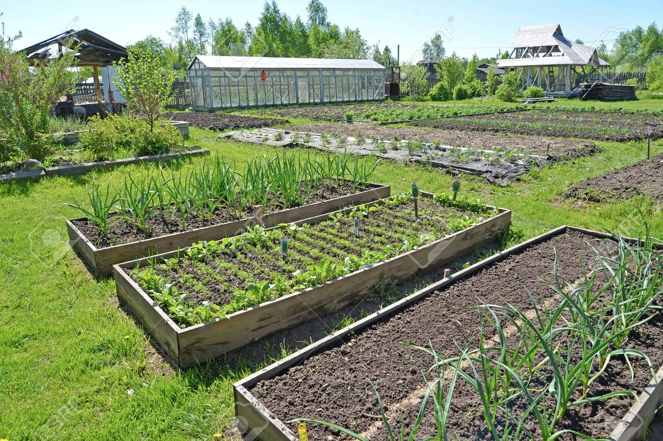The country site with a kitchen garden and the greenhouse in the spring - 122019522