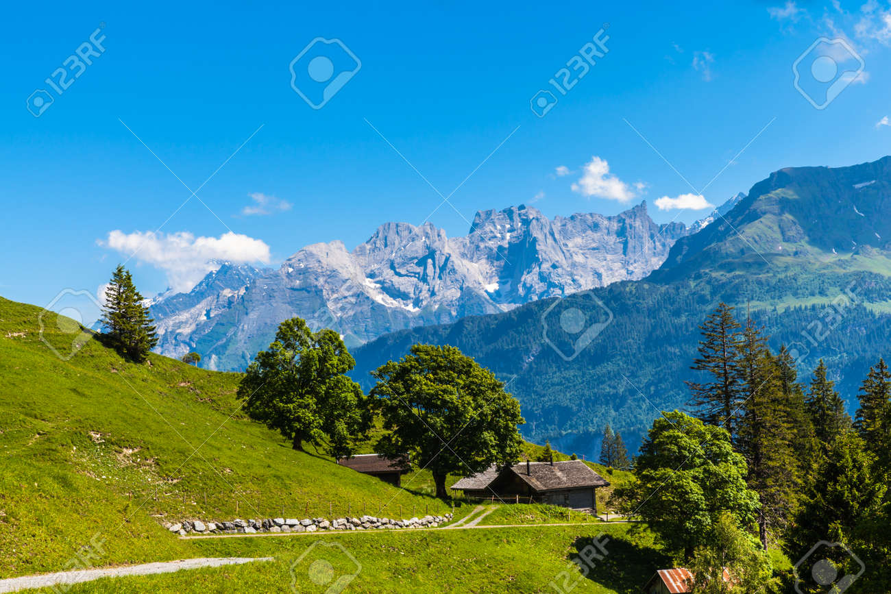 Panorama view on the hiking path on Bernese Oberland with trees in foreground and mountain range of the alps in background, Switzerland. - 151575904