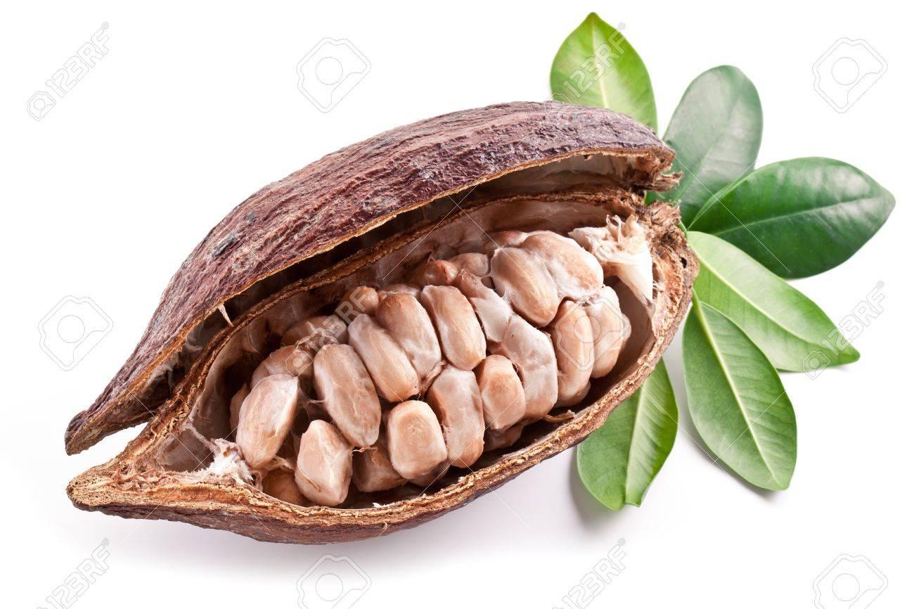 Cocoa pod on a white background. - 18958868