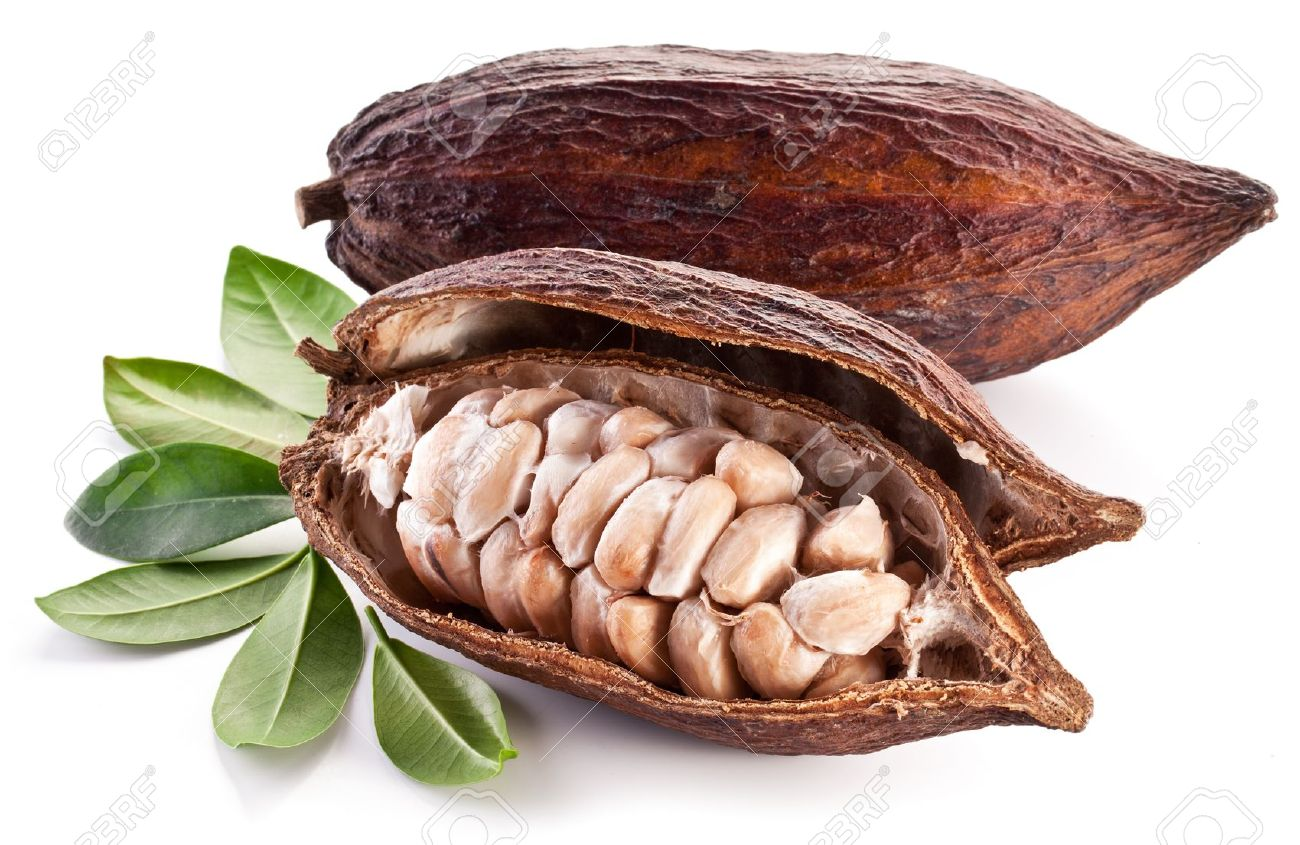 Perfect Cocoa Beans Pod On A White Background Stock Photo L Throughout Design Decorating