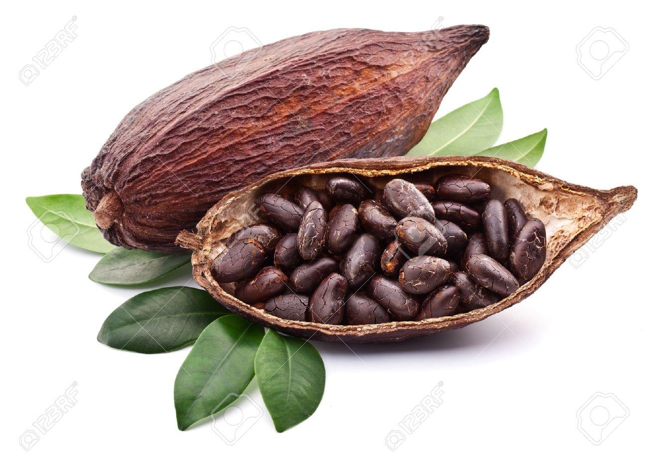 Cocoa pod on a white background. Stock Photo - 18958820