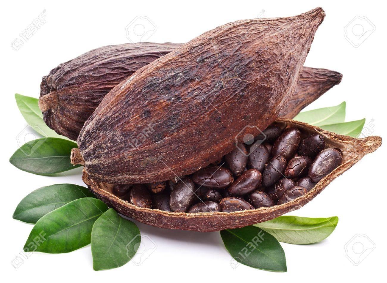 cocoa pod on a white background stock photo