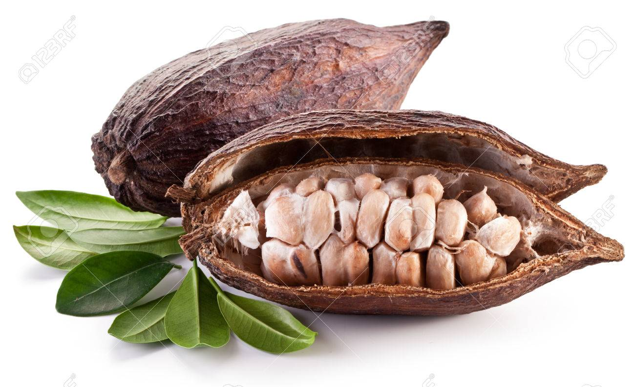 Cocoa pod on a white background. - 27782433