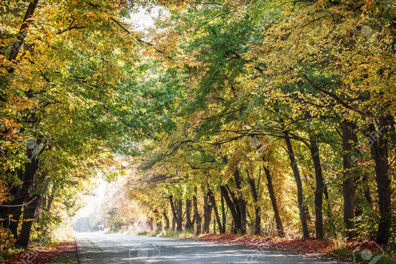 Autumn Landscape With Road And Beautiful Colored Trees. Stock Photo ...