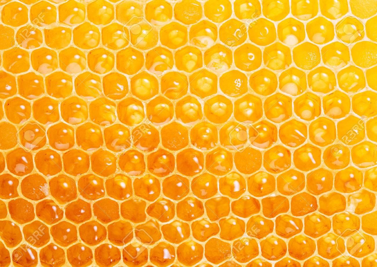 Honeycomb.  High-quality picture.  Macro shot. Standard-Bild - 46547387